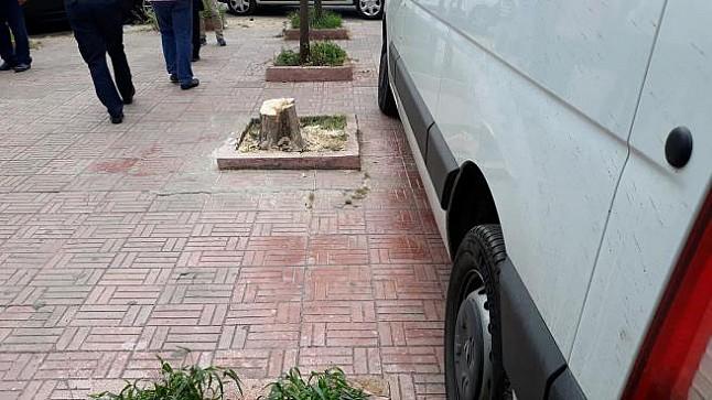 سلطات البيضاء تُلزم مواطناً بغرس أشجار بعد قطعها
