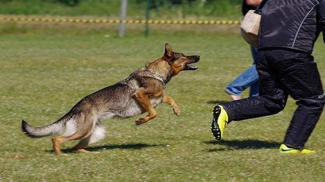 أمن طنجة يطلق الرصاص على كلب هاجم شرطيا