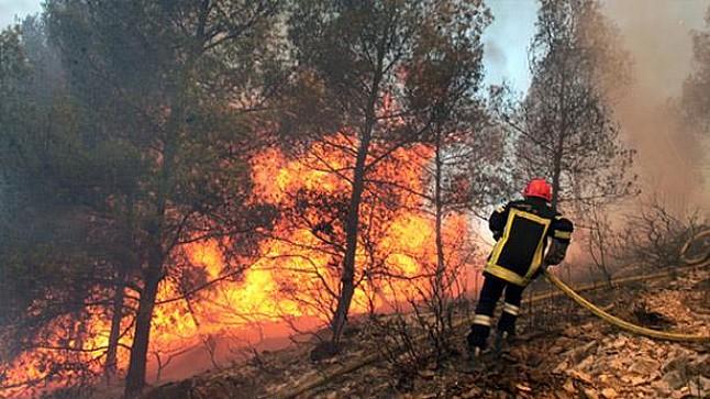 مندوبية الغابات: الحرائق التهمت أزيد من 200 هكتار منذ بداية 2019