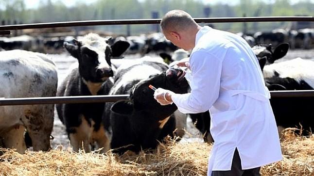 """أونسا"""": تلقيح ما يفوق 18 مليون من الأبقار والأغنام والماعز ضد """"الحمى القلاعية"""""""