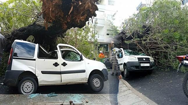 الرياح القوية تسقط شجرة على سيارة بالرباط
