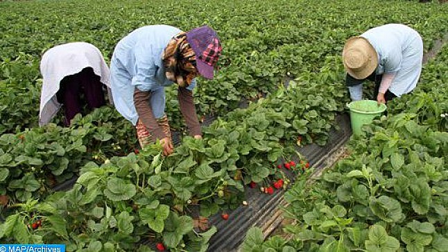 إسبانيا ترغب في تشغيل أزيد من 16 ألف عاملة مغربية