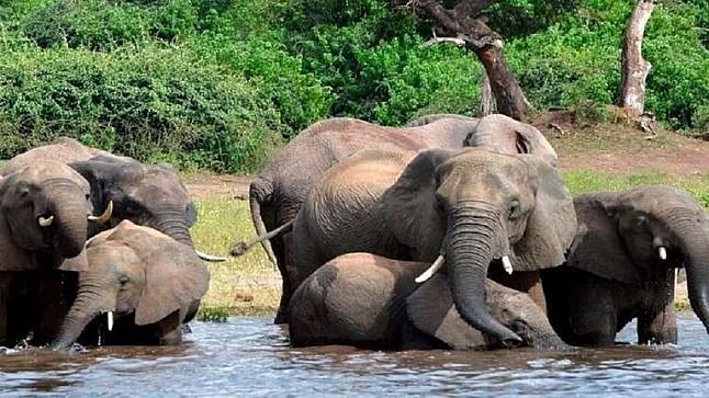 خطير : فيل يقتل امرأتين ويصيب 4