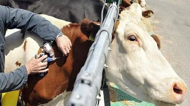 """أونسا"""" يستنفر مصالحه ويطلق حملة وطنية ضد الأمراض الحيوانية المعدية"""