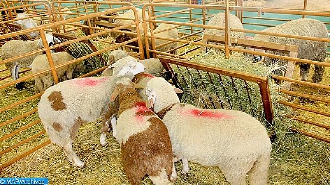 اليوسفية .. افتتاح السوق الأسبوعي لجماعة الخوالقة في وجه مربي الماشية