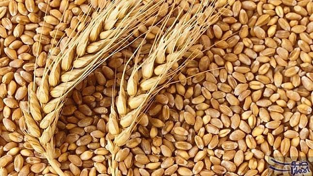 الجفاف يدفع المغرب إلى استيراد أطنان من الحبوب