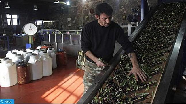 إنتاج زيت الزيتون في إيطاليا تحت رحمة بكتيريا قاتلة
