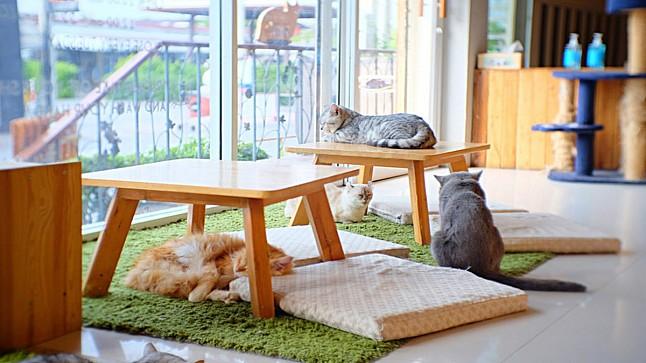 إحداث مقهى للقطط الضالة