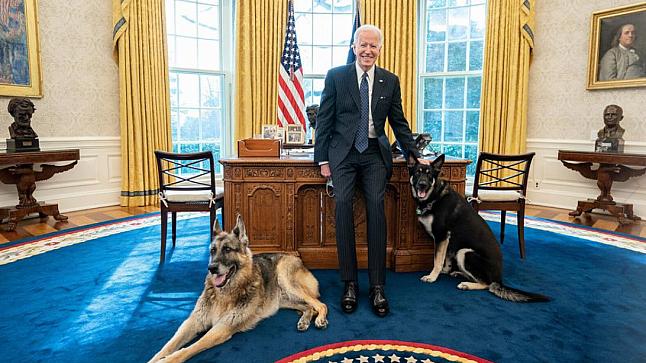 """إعادة كلبي بايدن إلى منزل العائلة بعد """"حادث عضّ"""" في البيت الأبيض"""